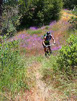 images/Trails/Idyllwild/Idyllwild-5JUN05-Pub-20.jpg